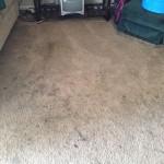 Elgin-Dirty-Carpet