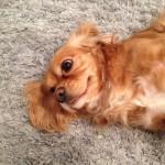 Elgin-Dog-Poop-Cleaning