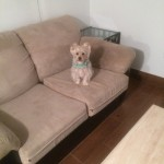 Elgin-Sofa-Pet-Stain-Cleaning