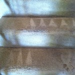 Elgin-Stairs-Carpet-Cleaning