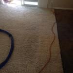 Elgin-Traffic-Area-carpet-cleaners