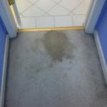 Elgin-Vomit-1-before-carpet